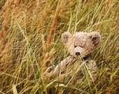 Teddy Bear (Mishka) in meadow - fine art photo 8x11 for framing