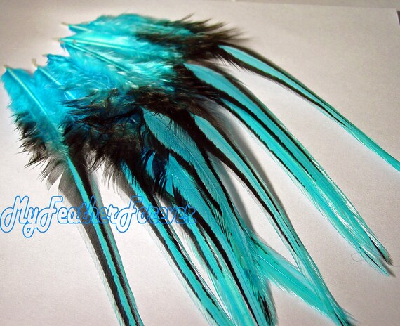 SALE 12 FEATHER 4'' long turquoise blue with black lace 4 crimp bead hair extension crafts