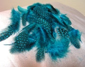 feather, loose feathers, bulk wholesale, turquoise blue spotted guinea plumage, lot
