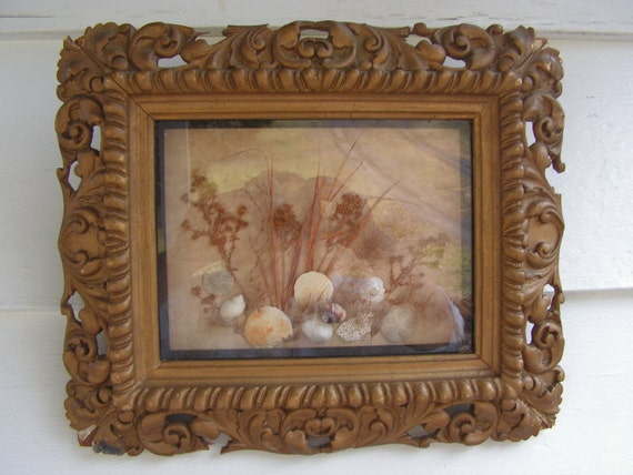 Late 1800s early 1900s Antique Diorama Natural Science Sand Dollars and Shells Folk Art