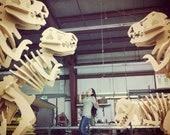 GIANT DINOSAUR 3D PUZZLE 3ft x 5 ft