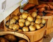 Potatoes 8X10 Photo Fine Art Photograph Open Air Green Basket Vegetable Bergmans Market Stand Marblehead Ohio Childs Room Nursery Decor
