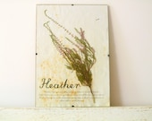 Pressed Herbs- Heather in Frame (3)
