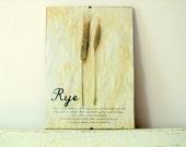 Pressed Herbs- Rye in Frame (5)