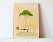 Pressed Herb- Parsley in Frame (2)