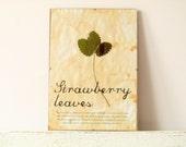 Pressed Leaf- Strawberry leaves in Frame (2)