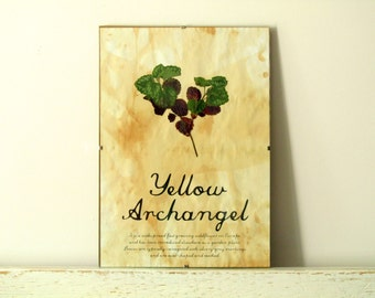 Pressed Plants- Yellow Archangel in Frame (2)