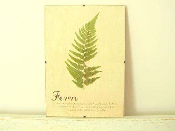 Pressed Herbs- Fern in Frame (3)