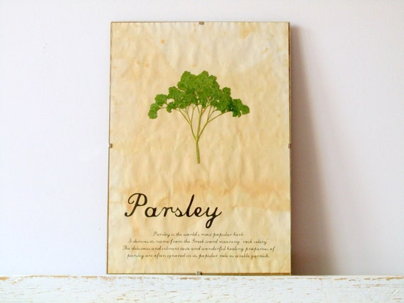Pressed Herb- Parsley in Frame (2)