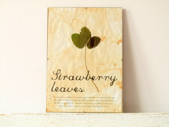 Pressed Leaf- Strawberry leaves in Frame (2)