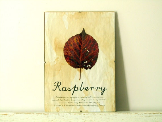 Pressed Herbs- Raspberry in Frame (4)