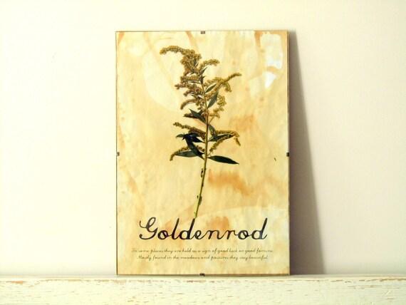 Pressed Flowers- Goldenrod in Frame (2)