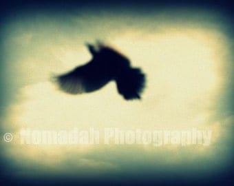 Abstract, Black bird in flight, green sky open wings, Flying, Flight, Surreal photo, Fine art photography, Home décor, halloween