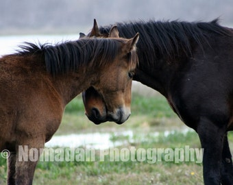Wild horse photo, Love, animal photography. Lovers art, Valentine gift for her, him, gift for man, woman, Love, Fine art photography