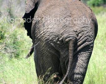 Animal photography, Elephant photograph, safari, African animal, Wildlife nature Photograph, Home African decor,