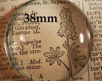 24 - 38mm Glass Cabochon Round Crystal Clear,  Extra Large for use with Pendant , glue on bails or magnet making