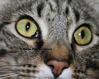 Face of the Feline-  8 X 12Print