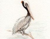 Pelican Fine Art Print, Watercolor Print, Bird Painting, 4x6 Bird Art