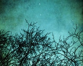 Dreamy tree photo - bare tree branches under a magical night sky. Surreal whimsical wall art in turquoise / blue and black