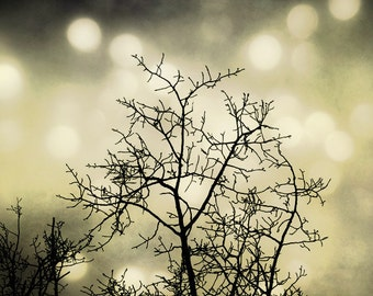 Surreal Tree Photo, dreamy gold bokeh lights, golden sky, bare branches, whimsical wall art, shabby chic home decor
