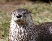Zoo Animal Otter Picture for Wall Decor - 5x7 Matted Photo Printed on Metallic Paper