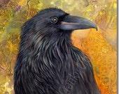 Haida Gwaii Raven
