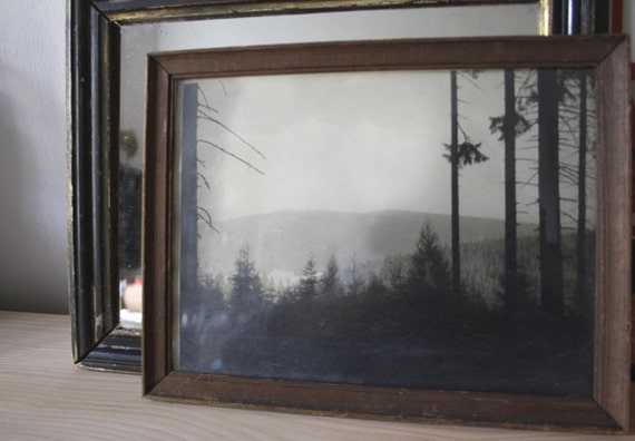 INTO THE FOREST. Vintage framed Photograph