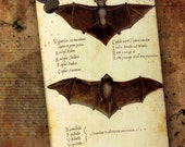 "Vintage Halloween Gift Tags  ""Chiroptera"" by No.9"