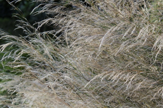 Grasses--matted framed nature photo
