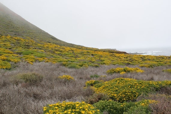 Flowered Hillside, Garrapata State Park, Big Sur, California coast