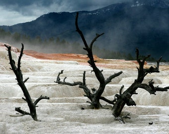 Mammoth Hot Springs 3, Yellowstone National Park, Springs, Hot Springs