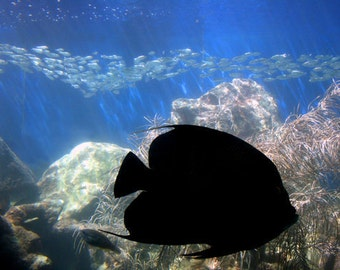 Sea Life, Fish, Coral World, St. Thomas, VI