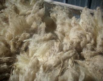 Unwashed Shetland Sheep Wool White -Thora-3 1/2 lb