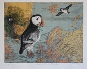 Etching of Puffin, SEABIRD CLOWNS of the AIR, solar plate etching of puffins in the Atlantic Sea