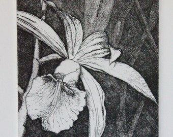 Residing in the Rainforest, black etching on white paper
