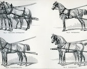 Wonderful Vintage Page of German Lexicon-Harness for Horses