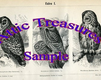 Digital Download-1894 Vintage Print of Owls from German Lexicon