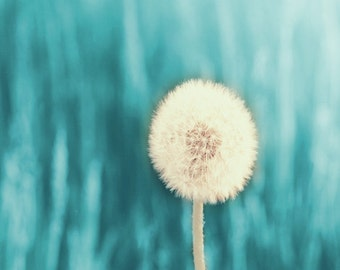 Dandelion Aqua Art Print - Blue White Nature Garden Abstract Surreal Wall Art Home Decor Photograph