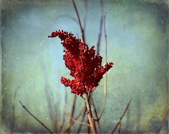 Tree Red Flower Bud Print - Aqua Blue Green Red Floral Home Decor Wall Photography