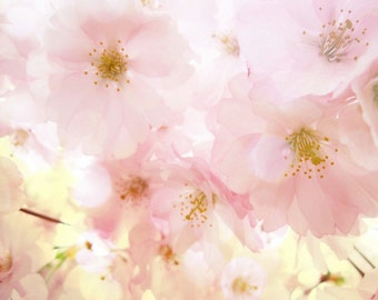 Cherry Blossom Tree Bokeh Art Print - Spring Pink Soft Flower Floral Wall Art Home Decor Photograph