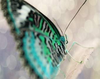 Butterfly Art Print  - Aqua Black Bokeh Whimsical Nursery Wall Art Home Decor Photograph