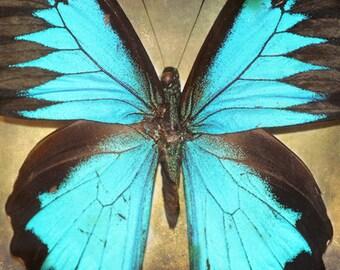 Butterfly Art Print - Aqua Black Wall Art Home Decor Nursery Girl Room Natural Wings Bug Photography