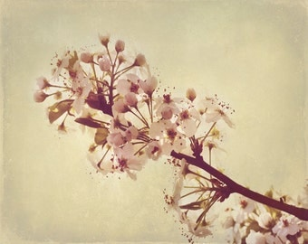 Cherry Blossom Spring Art Print - Pink Cream Beige Tan Soft Pastel Flower Floral Home Decor Shabby Chic Country Wall Art Photograph