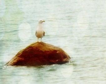 Seagull Art Print - Soft Bokeh Neutral Dreamy Pastel Beach House Wall Art Home Decor Water Ocean Bird Photography