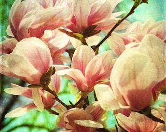 Magnolia Tree Spring Art Print - Pink Aqua Green Flower Floral Shabby Chic Vintage Home Decor Nursery Girls Room Photograph