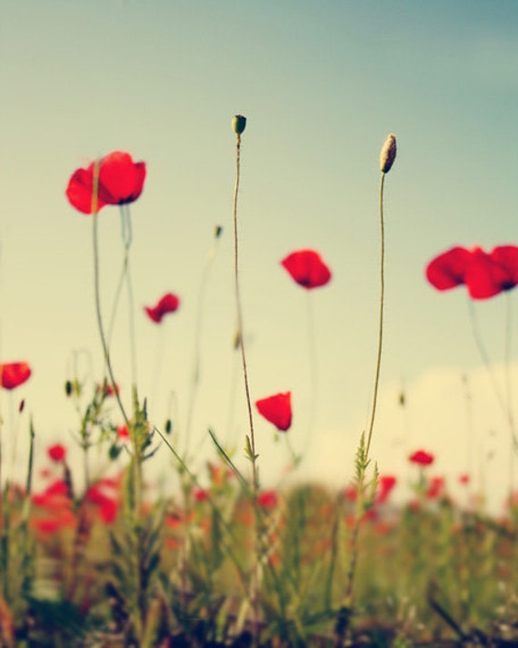 Red Poppy Field Flower Art Print - Floral Country Green Home Decor Nursery Wall Art Whimsical Photograph