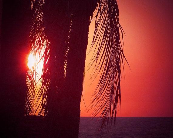Sunset Beach Art Print - Red Black Palm Tree Silhouette Beach House Wall Art Home Decor Photograph