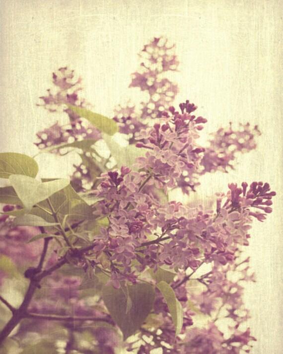 Lilac Tree Vintage Spring Art Print - Purple Plum Amethyst Cream Yellow Shabby Chic French Country Romantic Home Decor Wall Art Photo