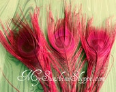 Peacock Feather Tails - 10-12 inches - set of 6 - HOT PINK