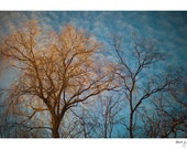 Tree Photo - Michigan Landscape - Blue Sky - Cloud Photo - Home Decor - Nature Photo - Fine Art Photography - Passing By